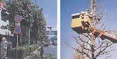 「街路樹剪定士」の仕事