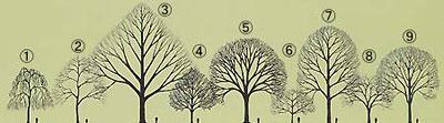 樹形は木の種類によって千差万別です